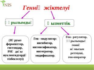 Геннің жіктелуі Құрылымдық (Нәруыз ферменттер, гистондар, РНҚ дағы нуклеотидт