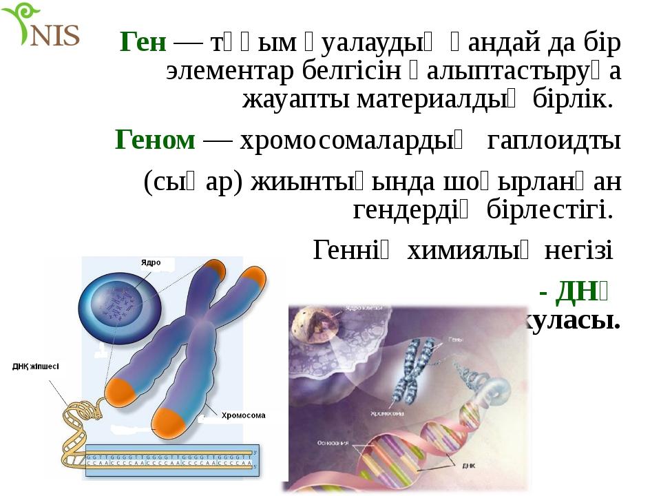 Ген — тұқым қуалаудың қандай да бір элементар белгісін қалыптастыруға жауапты...