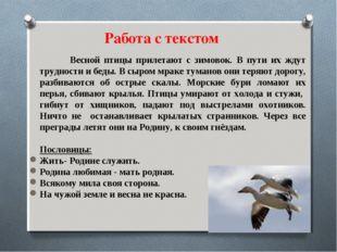Весной птицы прилетают с зимовок. В пути их ждут трудности и беды. В сыром м