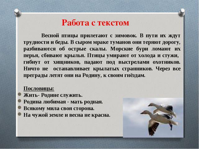 Весной птицы прилетают с зимовок. В пути их ждут трудности и беды. В сыром м...