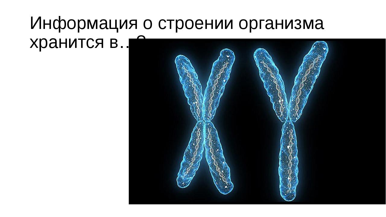 Информация о строении организма хранится в…?