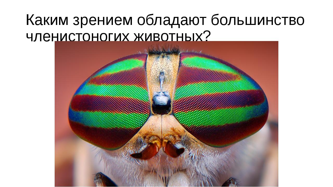 Каким зрением обладают большинство членистоногих животных?