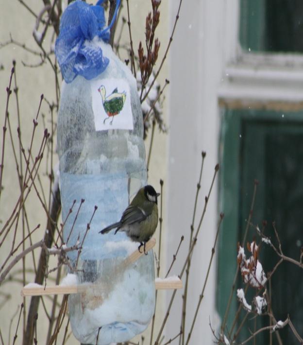 F:\Птицы\сайт февраль\сайт патриот, птицы\IMG_3577.jpg