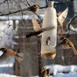 http://www.barbariki.ru/images/feeder/16.jpg