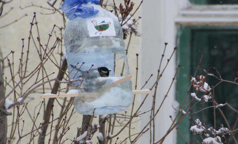 F:\Птицы\сайт февраль\сайт патриот, птицы\IMG_3576.jpg