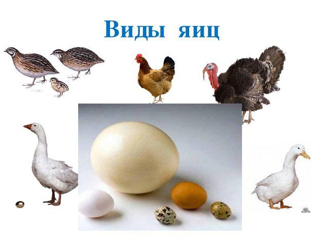 Виды яиц