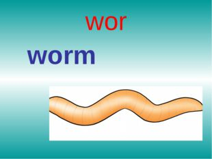 wor worm