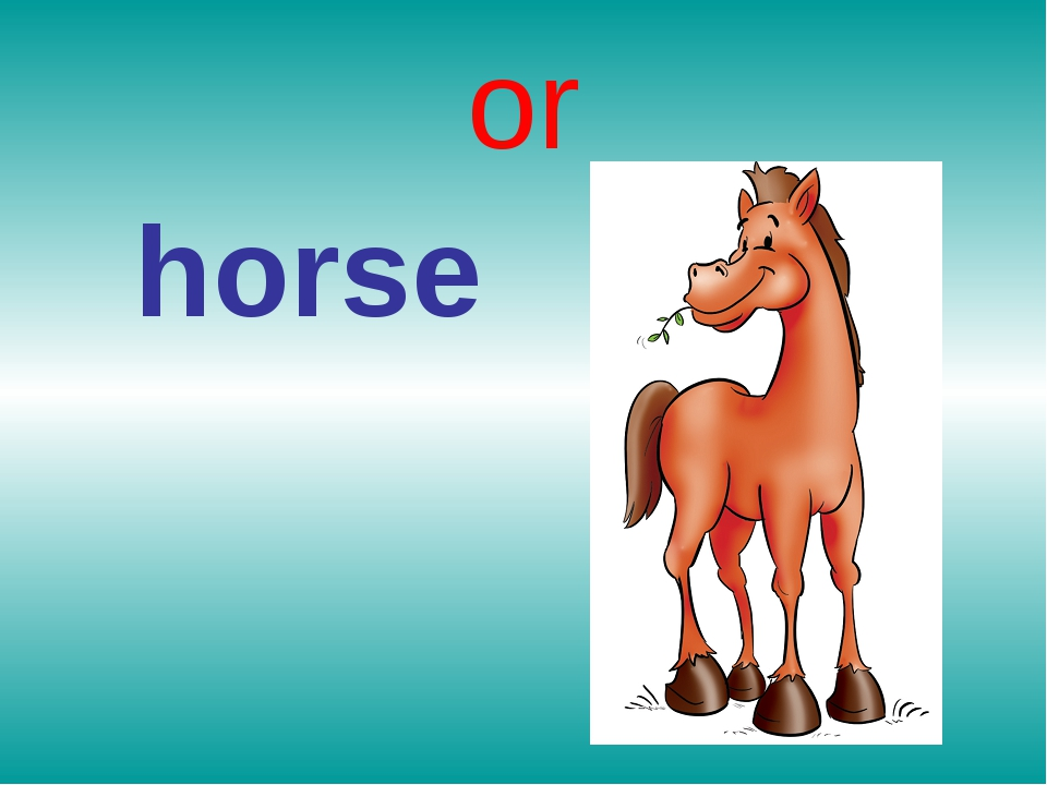 or horse