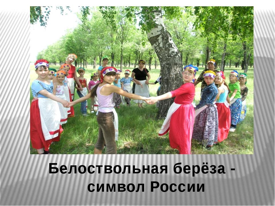Белоствольная берёза - символ России