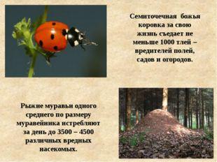 Рыжие муравьи одного среднего по размеру муравейника истребляют за день до 35