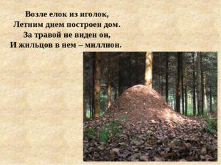 Возле елок из иголок, Летним днем построен дом. За травой не виден он, И жиль