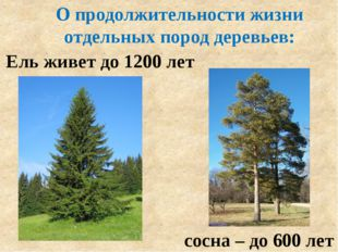 О продолжительности жизни отдельных пород деревьев: Ель живет до 1200 лет сос