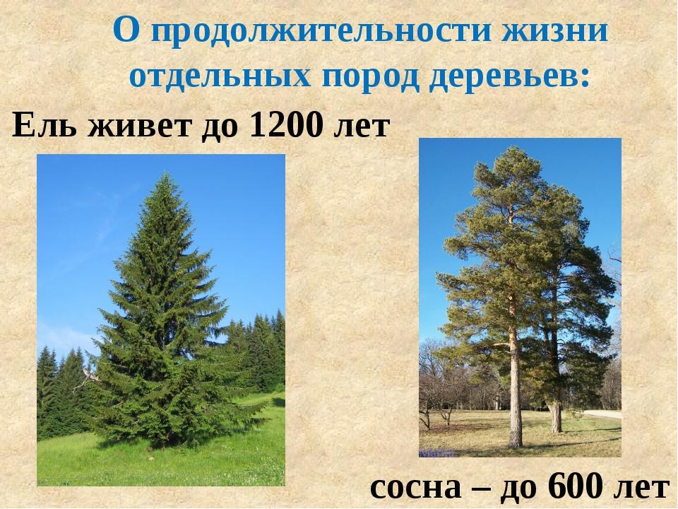 О продолжительности жизни отдельных пород деревьев: Ель живет до 1200 лет сос...