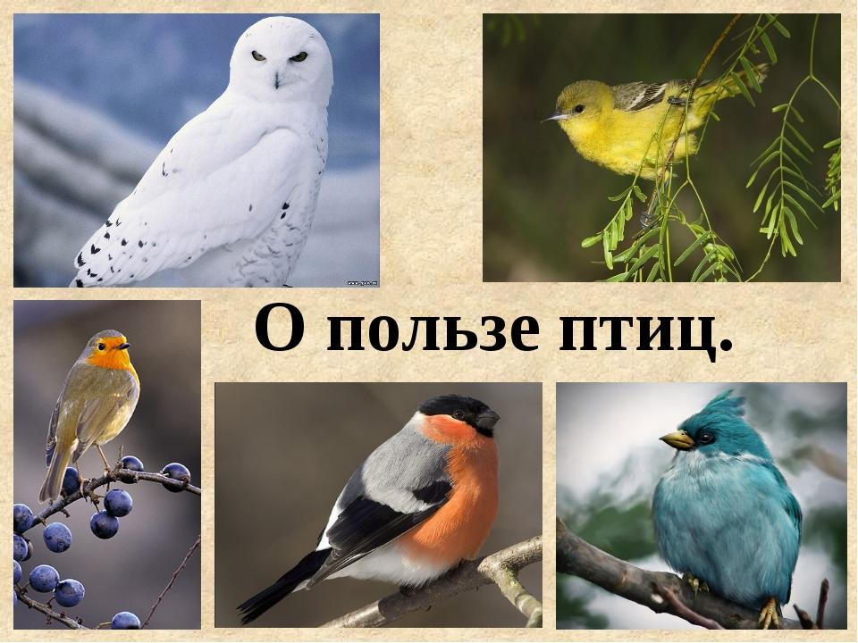 О пользе птиц.