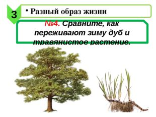 №4. Сравните, как переживают зиму дуб и травянистое растение. 3 Разный образ