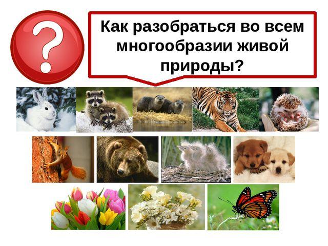 Как разобраться во всем многообразии живой природы?