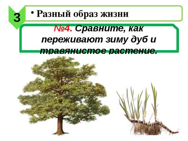 №4. Сравните, как переживают зиму дуб и травянистое растение. 3 Разный образ...