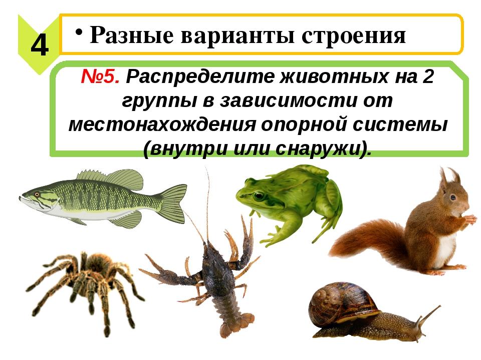 №5. Распределите животных на 2 группы в зависимости от местонахождения опорно...