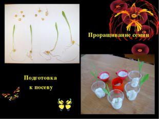 Проращивание семян Подготовка к посеву