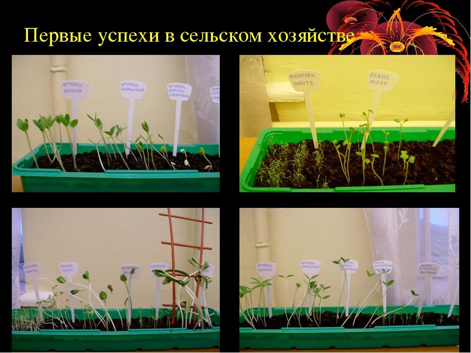 Первые успехи в сельском хозяйстве