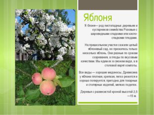 Яблоня Я́блоня— род листопадных деревьев и кустарников семейства Розовые с ша