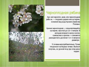 Черноплодная рябина Аро́ния чернопло́дная, или черноплодная ряби́на — плодово