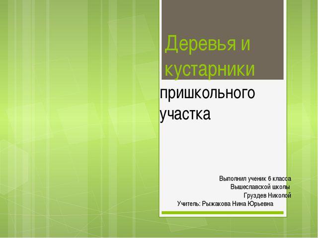 Деревья и кустарники пришкольного участка Выполнил ученик 6 класса Вышеславск...