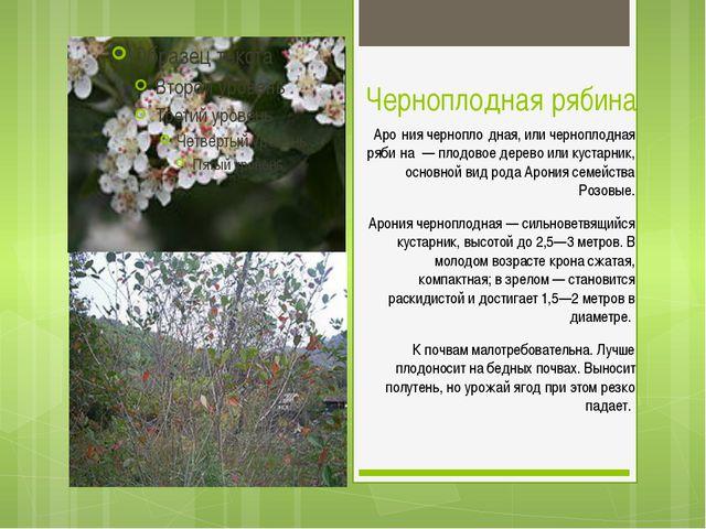 Черноплодная рябина Аро́ния чернопло́дная, или черноплодная ряби́на — плодово...