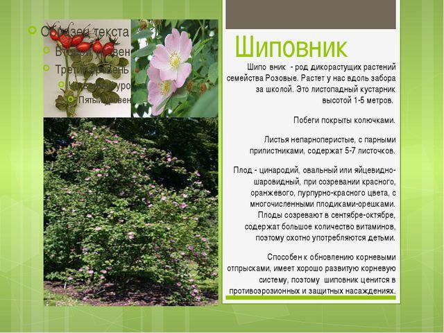 Шиповник Шипо́вник - род дикорастущих растений семейства Розовые. Растет у на...
