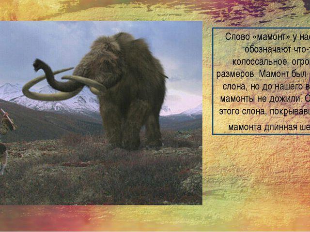 Слово «мамонт» у нас часто обозначают что-то колоссальное, огромных размеров....