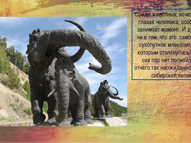 Среди животных, исчезнувших на глазах человека, особое место занимает мамонт....