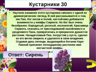 Кустарники 30 Научное название этого кустарника связано с одной из древнегреч
