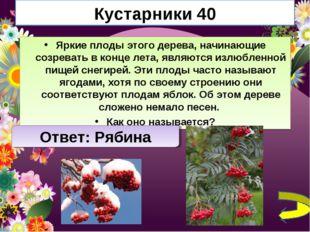 Кустарники 40 Яркие плоды этого дерева, начинающие созревать в конце лета, яв