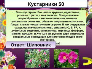 Кустарники 50 Это – кустарник. Его цветки крупные, одиночные, розовые. Цветет