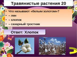 Травянистые растения 20 Что называют «белым золотом»? – лен – хлопок – сахарн