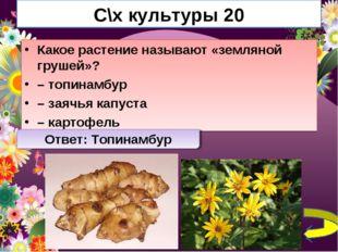 С\х культуры 20 Какое растение называют «земляной грушей»? – топинамбур – зая