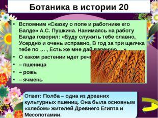 Ботаника в истории 20 Вспомним «Сказку о попе и работнике его Балде» А.С. Пуш