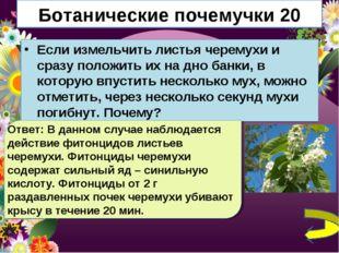 Ботанические почемучки 20 Если измельчить листья черемухи и сразу положить их
