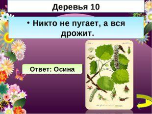 Деревья 10 Никто не пугает, а вся дрожит. Ответ: Осина