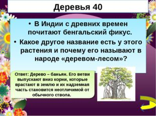Деревья 40 В Индии с древних времен почитают бенгальский фикус. Какое другое