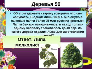 Деревья 50 Об этом дереве в старину говорили, что оно «обувает». В одном лишь