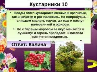 Кустарники 10 Плоды этого кустарника сочные и красивые, так и хочется в рот п