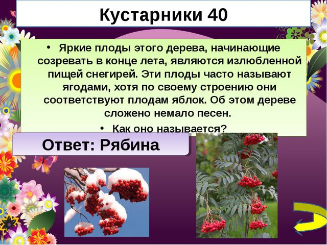 Кустарники 40 Яркие плоды этого дерева, начинающие созревать в конце лета, яв...