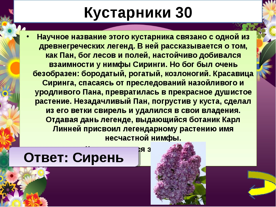 Кустарники 30 Научное название этого кустарника связано с одной из древнегреч...