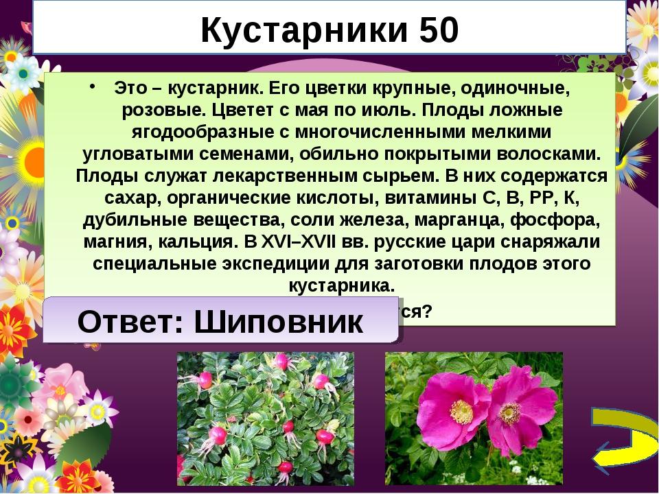 Кустарники 50 Это – кустарник. Его цветки крупные, одиночные, розовые. Цветет...