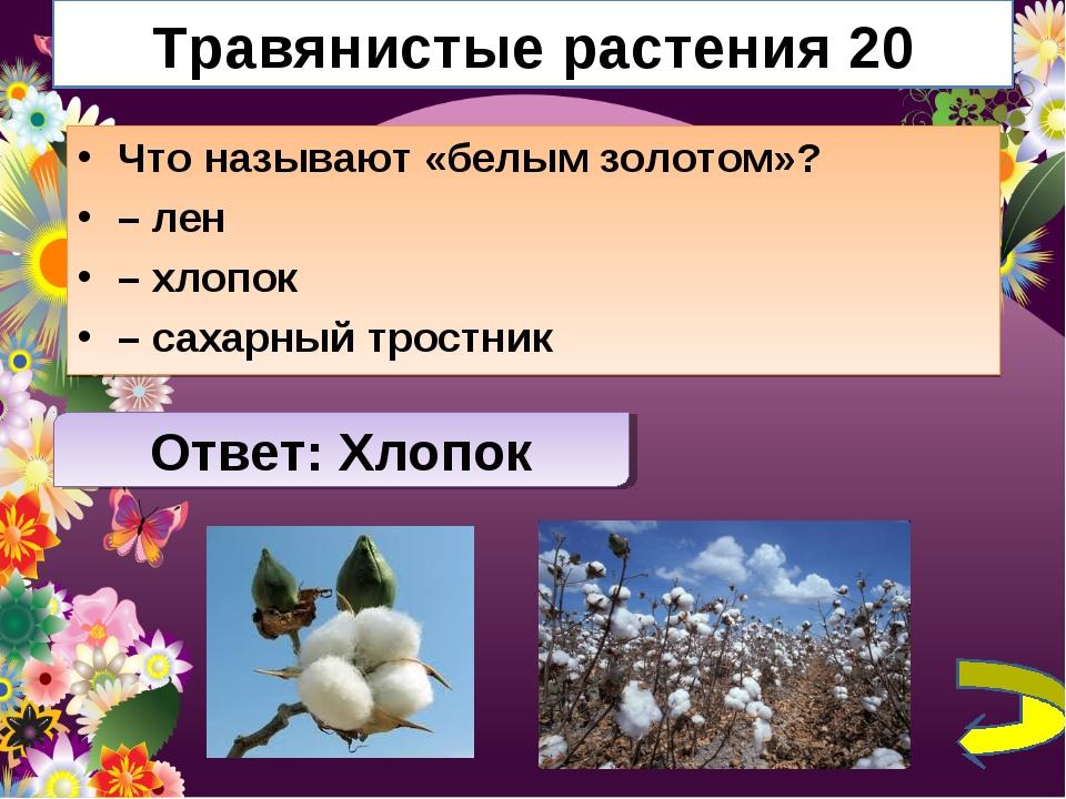 Травянистые растения 20 Что называют «белым золотом»? – лен – хлопок – сахарн...