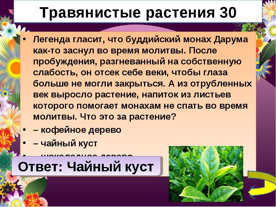 Травянистые растения 30 Легенда гласит, что буддийский монах Дарума как-то за...