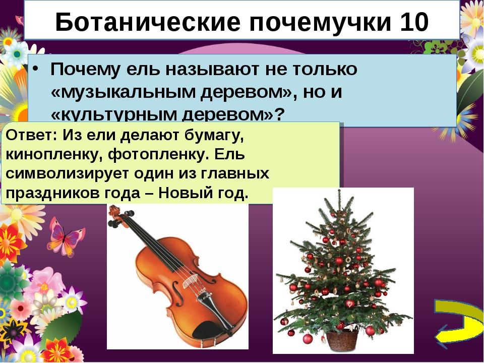 Ботанические почемучки 10 Почему ель называют не только «музыкальным деревом»...