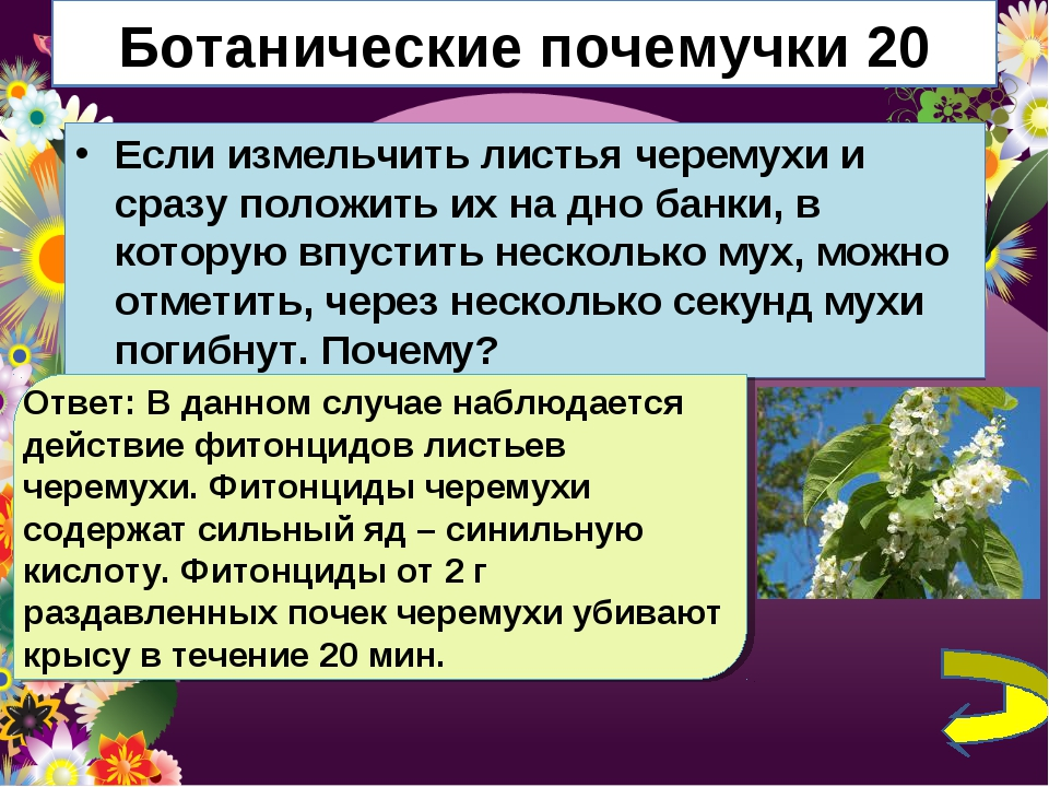 Ботанические почемучки 20 Если измельчить листья черемухи и сразу положить их...