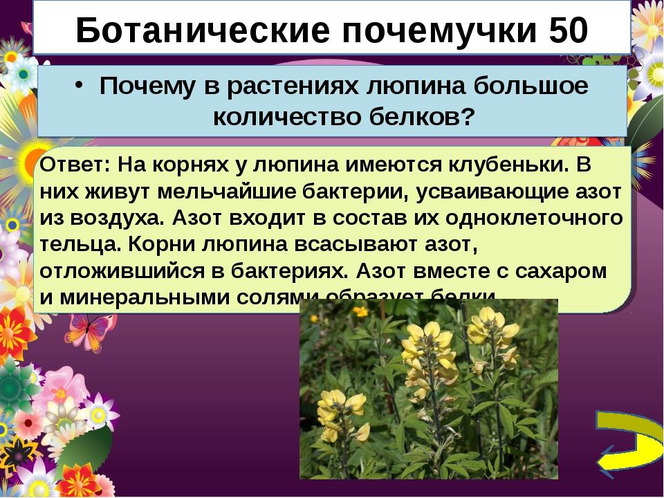 Ботанические почемучки 50 Почему в растениях люпина большое количество белков...
